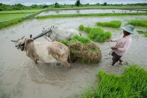 myfarm-in-myanmar