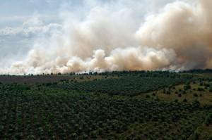 Kepulan asap membumbung di areal hutan dan lahan yang terbakar di Desa Medang Kampai, Dumai, Riau, Senin (9/8). Pemerintah Provinsi Riau melalui Satgas Karhutla terus melakukan operasi pemadaman kebakaran hutan dan lahan melalui udara dan darat agar dapat meminimalisir 'hot spot' yang ada di Riau. ANTARA FOTO/Rony Muharrman/foc/16.